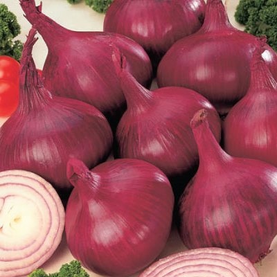 Organic Red Burgundy Onion Seeds - 20 Count
