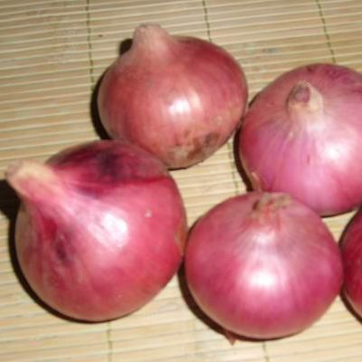 Organic Candy Apple Red Onion Seeds - 20 Count