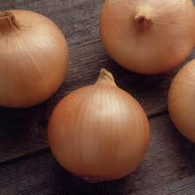 Organic Giant Candy Onion Seeds - 20 Count