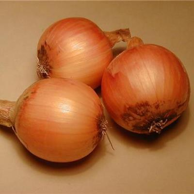 Organic Yellow of Parma Onion Seeds - 20 Count