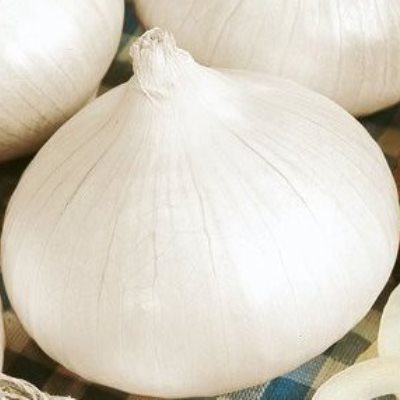 Organic Southport White Blobe Onion Seeds - 20 Count