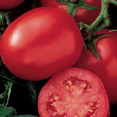Organic Enchantment Tomato Seeds - 20 Count - Click Image to Close