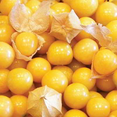 Organic Aunt Molly's Ground Cherry Tomato Seeds - 20 Count