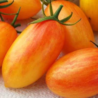 Organic Blush Plum Tomato Seeds - 20 Count