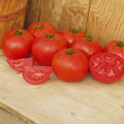 Organic Crista Tomato Seeds - 20 Count