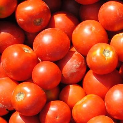 Organic Five Star Grape Tomato Seeds - 20 Count