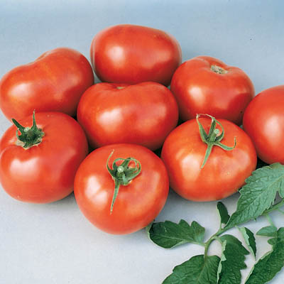 Organic Georgia Steak Tomato Seeds - 20 Count