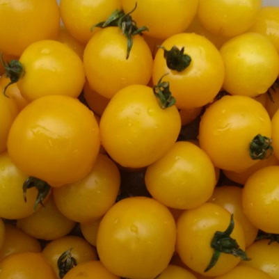 Organic Galina Yellow Cherry Tomato Seeds - 20 Count