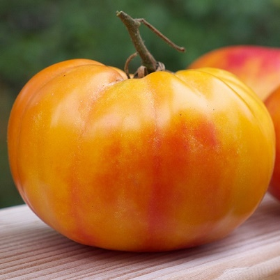 Organic Gold Medal Tomato Seeds - 20 Count