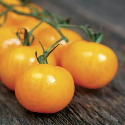Organic Golden Gem Cherry Tomato Seeds - 20 Count