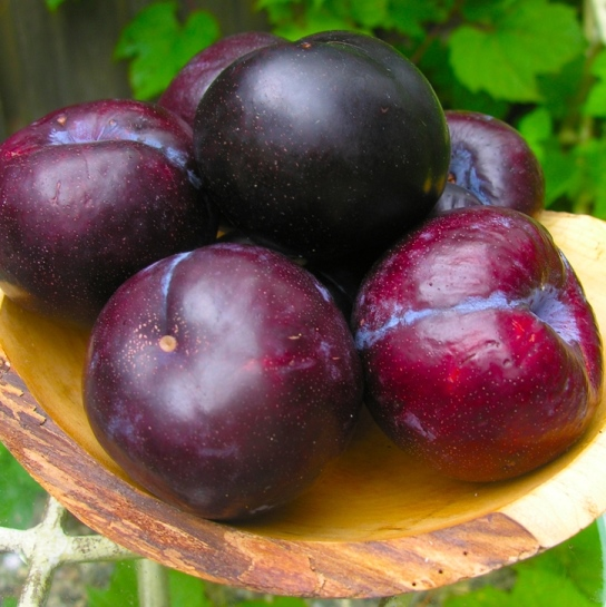 Organic Black Plum Solid Sugar Soap Scrubs