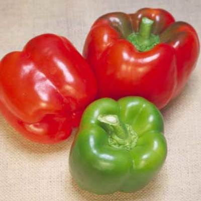 Organic Brigadier General Pepper Seeds - 15 Count