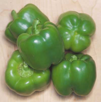 Organic California Wonder Green Pepper Seeds - 15 Count