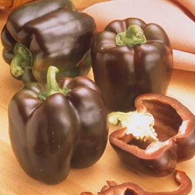 Organic Chocolate Chip Pepper Seeds - 15 Count
