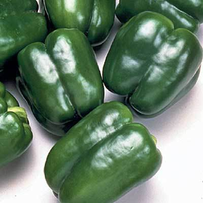 Organic King of Camelot Green Pepper Seeds - 15 Count