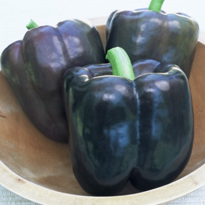 Organic Purple Southern Belle Pepper Seeds - 15 Count