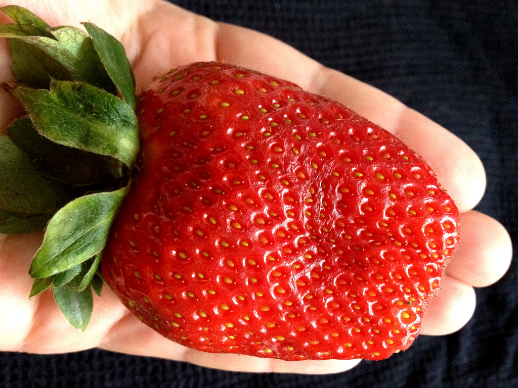 Organic Cabot Strawberry Seeds - 25 Count