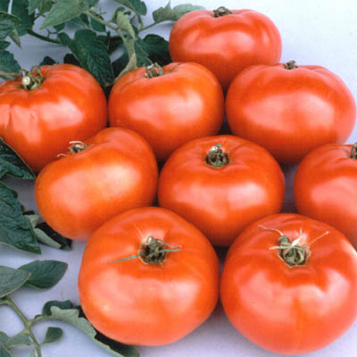 Organic Jet Star Tomato Seeds - 20 Count