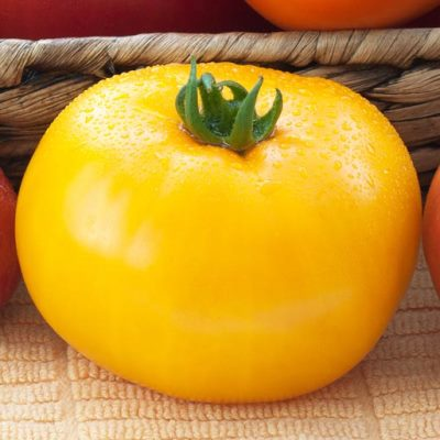 Organic Lemon Boy Yellow Tomato Seeds - 20 Count