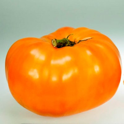 Organic Persimmon Orange Beefsteak Tomato Seeds - 20 Count